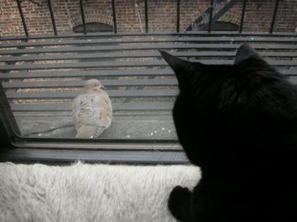 Bruno the Birdwatcher
