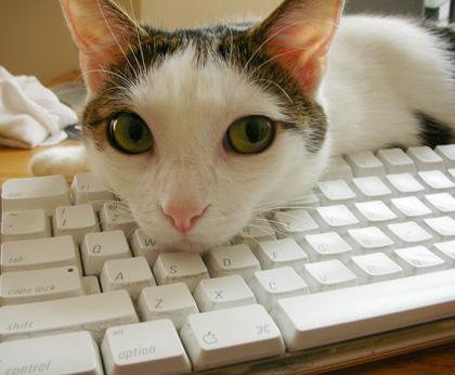 kittyonkeyssweetpea.jpg
