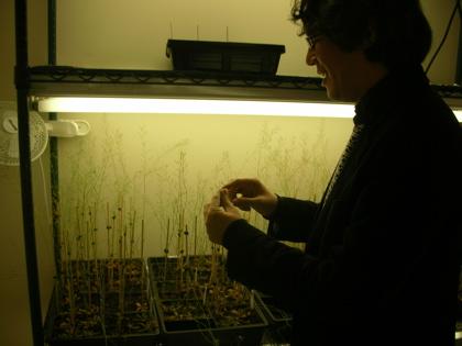 Dr. Purugganan studies Plants
