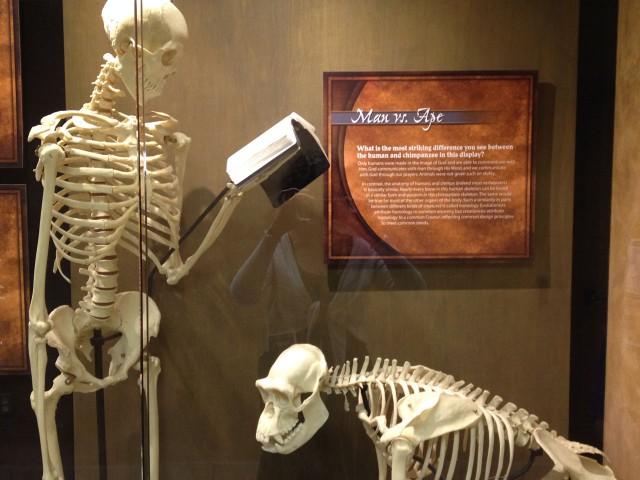 Human skeletons read the bible, unlike ape skeletons.