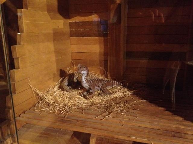 Cute lil' dinos on the ark